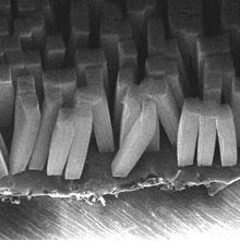 image_17678_largeimagefile Carbon Nanotube Tape: Heavy-duty Approximator of Gecko Feet