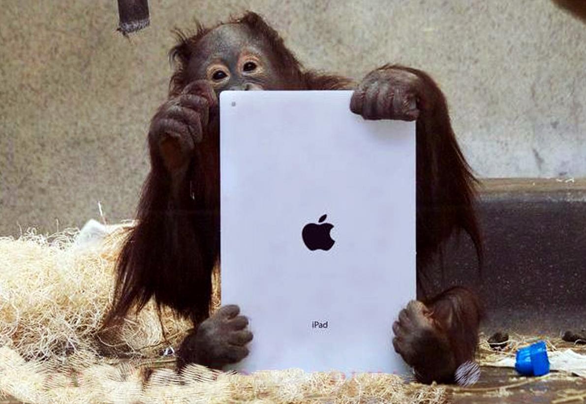 orangutan-on-ipad-1