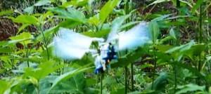 dragonfly-microuav-10